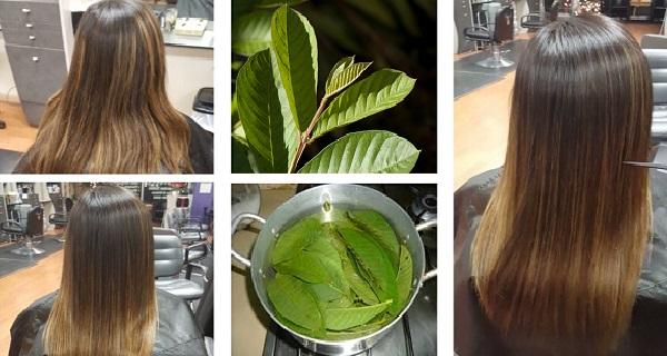 cách Trị rụng tóc hiệu quả nhất với lá ổi
